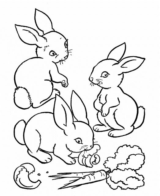 Coloriage et dessins gratuits Les Petits Lapins adorables mangent à imprimer