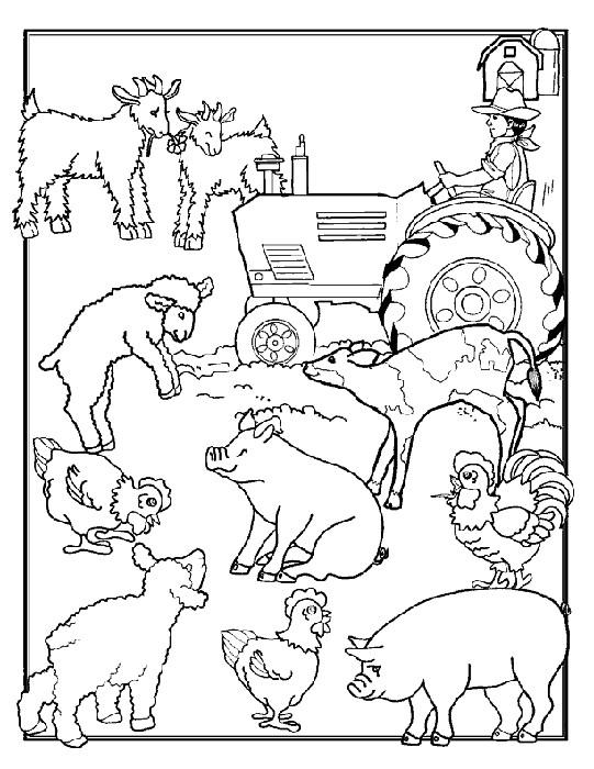 Coloriage et dessins gratuits Animaux de Ferme pour enfant à imprimer