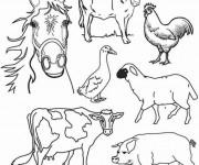 Coloriage et dessins gratuit Animaux de la Ferme à imprimer