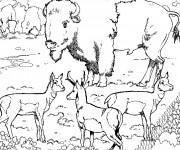 Coloriage et dessins gratuit Animaux Sauvages 36 à imprimer