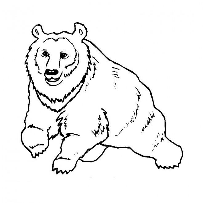 Coloriage et dessins gratuits Gros Ours sauvage à imprimer