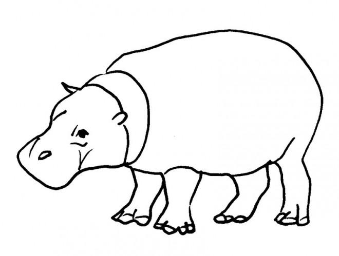 Coloriage et dessins gratuits hippopotame d'Afrique à imprimer