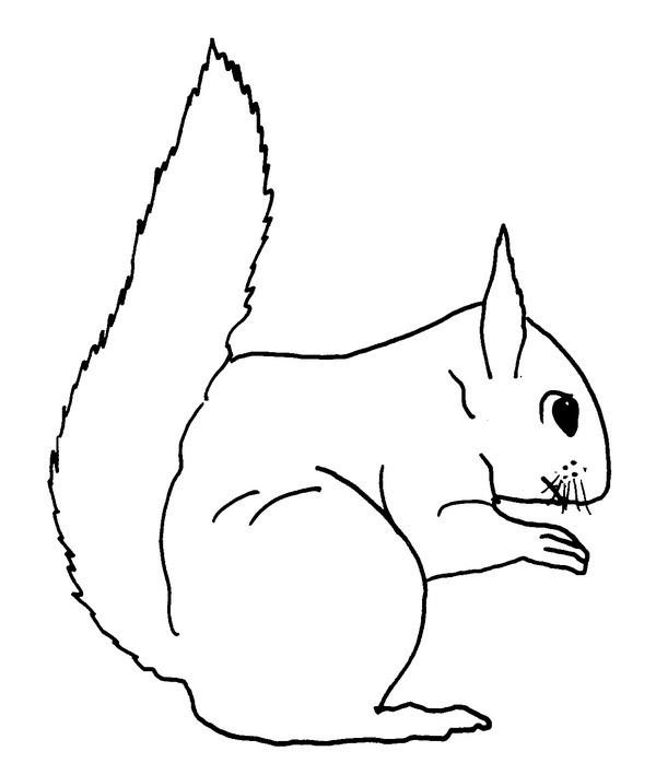 Coloriage et dessins gratuits L'écureuil facile à imprimer