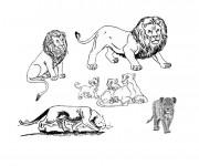 Coloriage La famille des Lions