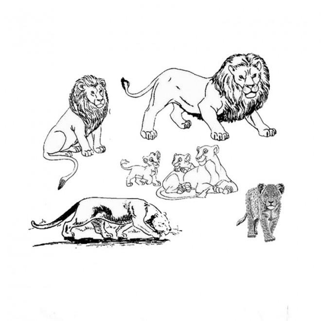 Coloriage et dessins gratuits La famille des Lions à imprimer