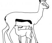 Coloriage et dessins gratuit Les Animaux 67 à imprimer