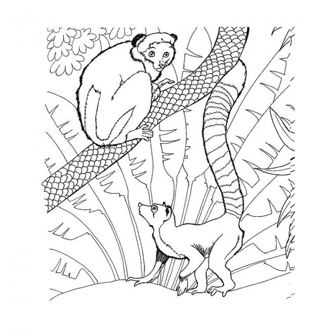 Coloriage et dessins gratuits Les Animaux sur l'arbre à imprimer