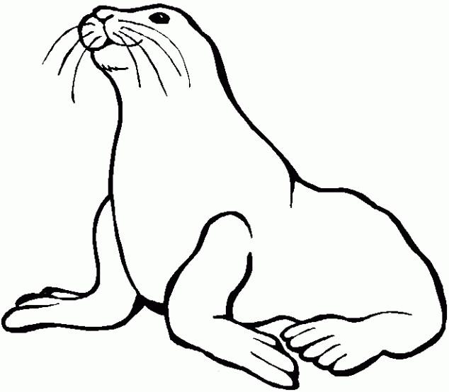 Coloriage et dessins gratuits Phoque animal mammifère à imprimer