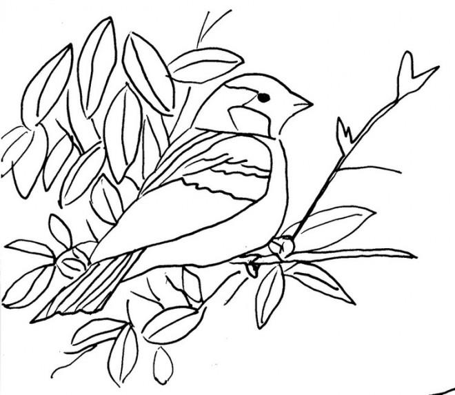 Coloriage Un Oiseau Sur Branche Dessin Gratuit A Imprimer