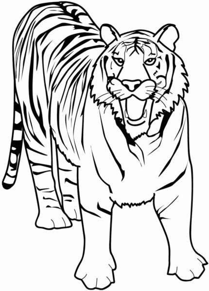 Coloriage Un Tigre En Noir Et Blanc Dessin Gratuit à Imprimer
