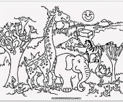 Coloriage dessin  Zoo 24