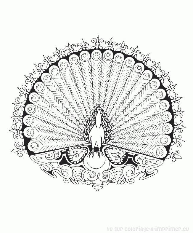 Coloriage et dessins gratuits Mandala Paon couleur à imprimer