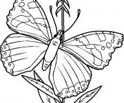 Coloriage Papillon à télécharger