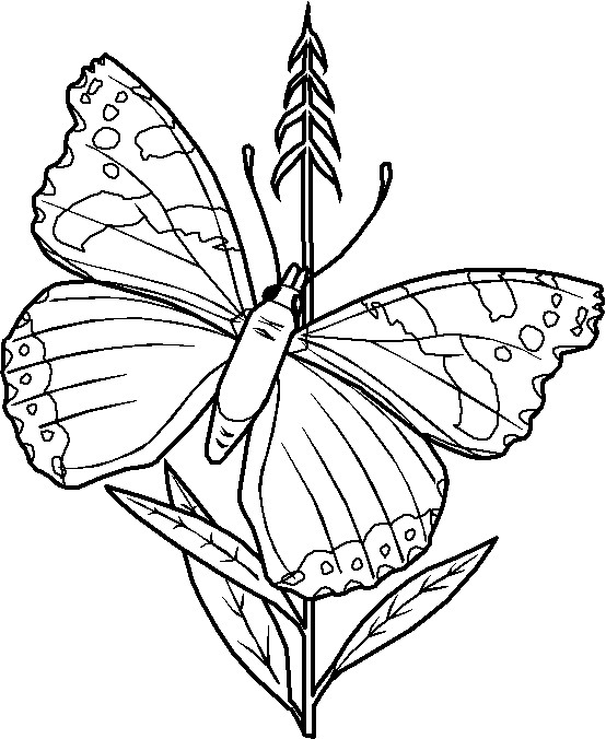 Coloriage et dessins gratuits Papillon à télécharger à imprimer
