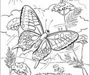 Coloriage dessin  Papillon Difficile 1