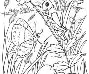 Coloriage dessin  Papillon Difficile 10