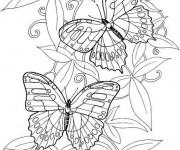 Coloriage dessin  Papillon Difficile 13