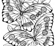 Coloriage dessin  Papillon Difficile 16