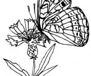 Coloriage dessin  Papillon Difficile 18