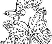 Coloriage dessin  Papillon Difficile 6
