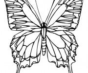 Coloriage dessin  Papillon Difficile 7