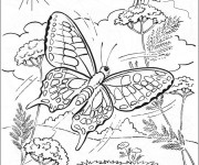 Coloriage Papillon Difficile dans La Nature