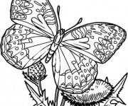 Coloriage Papillon Difficile  en couleur