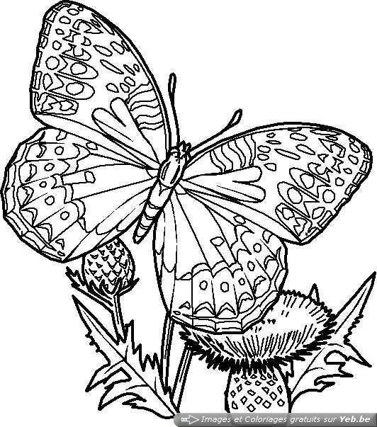 Coloriage Papillon Difficile En Couleur Dessin Gratuit A Imprimer