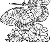 Coloriage Papillon  Difficile en Ligne