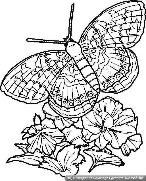 Coloriage et dessins gratuits Papillon  Difficile en Ligne à imprimer
