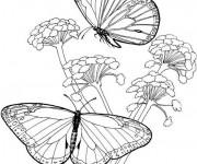 Coloriage Papillon Difficile en noir et blanc