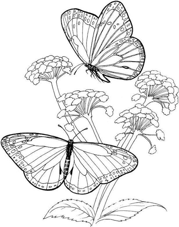 Coloriage et dessins gratuits Papillon Difficile en noir et blanc à imprimer
