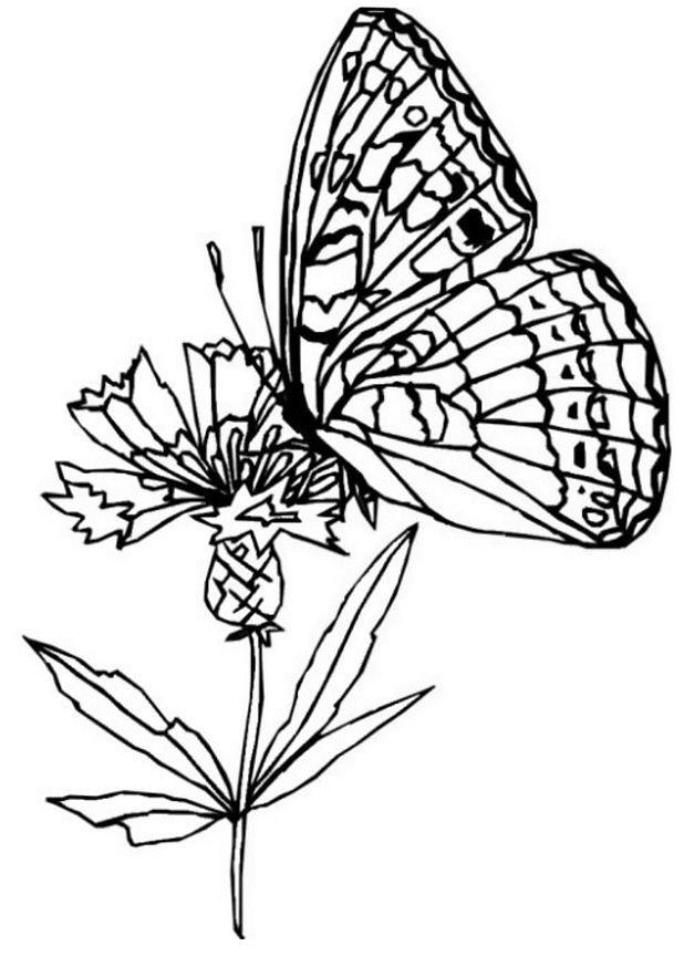 Coloriage et dessins gratuits Papillon Difficile Magique à imprimer