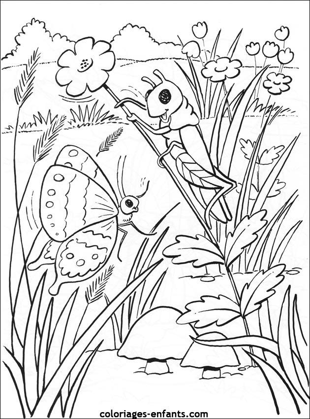 Coloriage et dessins gratuits Papillon Difficile réaliste à imprimer