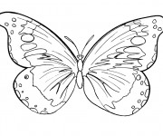 Coloriage Papillon Difficile stylisé