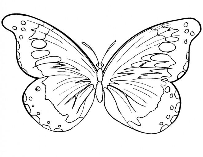 Coloriage et dessins gratuits Papillon Difficile stylisé à imprimer