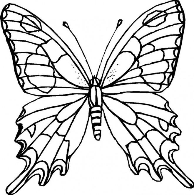 Coloriage et dessins gratuits Papillon Difficile sur Ordinateur à imprimer