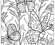 Coloriage Papillon Difficile vecteur