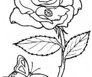 Coloriage Papillon et Fleur Difficile