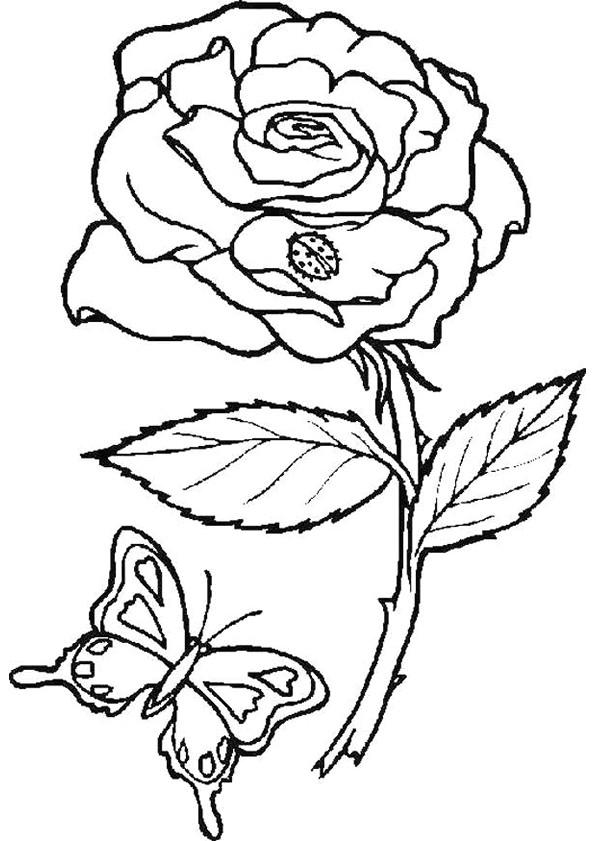 Coloriage Papillon Et Fleur Difficile Dessin Gratuit à Imprimer