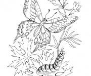 Coloriage Papillon et Ver en plein air