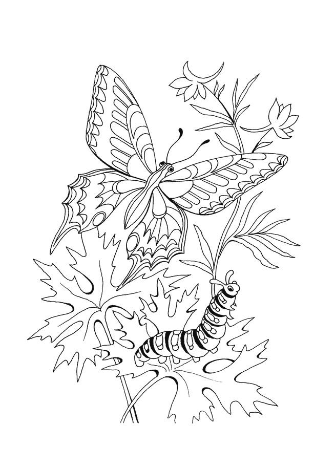 Coloriage et dessins gratuits Papillon et Ver en plein air à imprimer