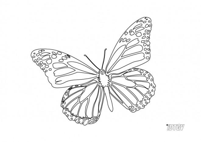 Coloriage papillon facile colorier dessin gratuit imprimer - Coloriage de papillon a imprimer gratuit ...