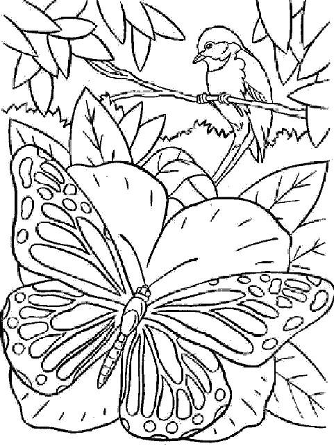Coloriage et dessins gratuits Papillon Magique dans La Nature à imprimer