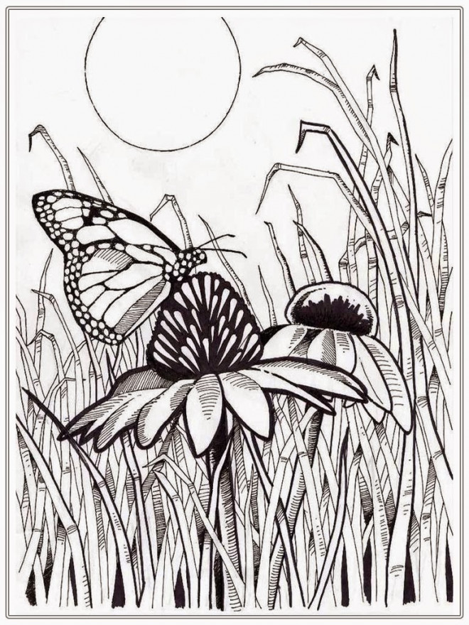 Coloriage et dessins gratuits Papillon sur Fleur Pour Adulte à imprimer
