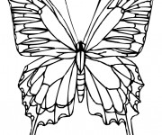 Coloriage Papillon Vue de Face Difficile