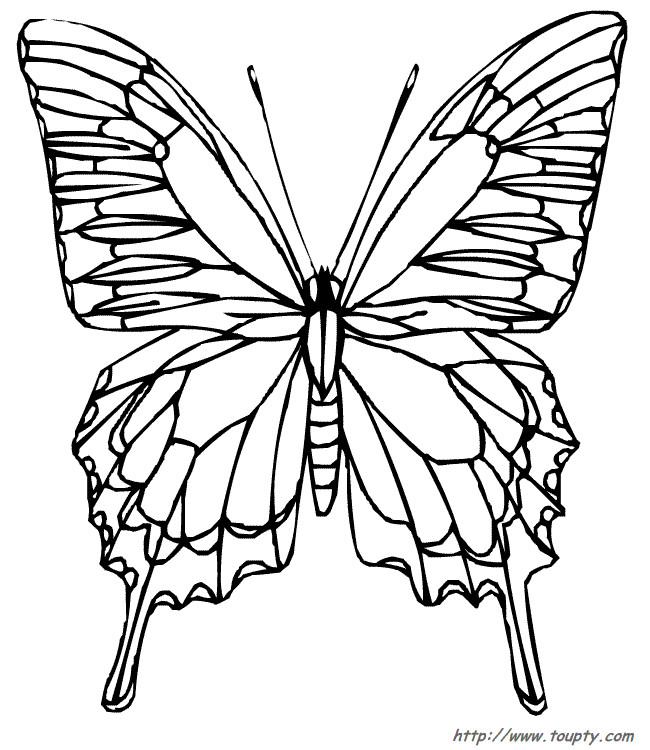 Coloriage papillon vue de face difficile dessin gratuit imprimer - Dessin papillon a decouper ...