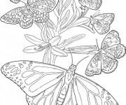 Coloriage Papillons en Printemps  Difficile