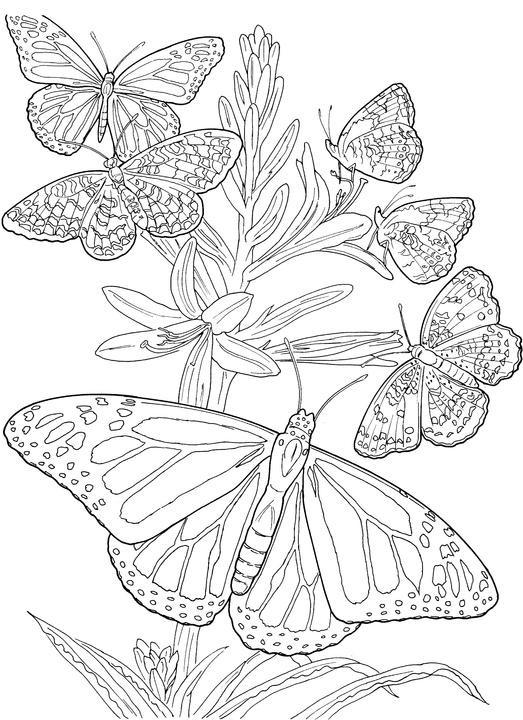 Coloriage papillons en printemps difficile dessin gratuit imprimer - Dessin papillon a decouper ...