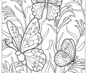 Coloriage Papillon Difficile